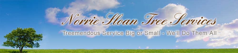 Norrie Sloan Tree Services