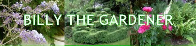 Billy the Gardener