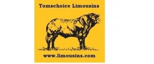 Tomschoice Limousins