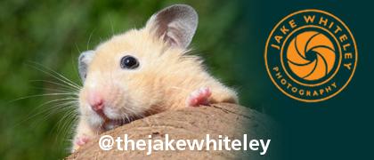 Jake Whiteley