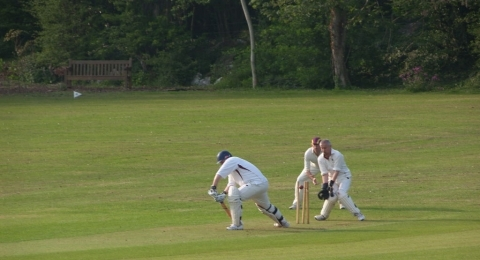 Ipplepen Cricket Club banner image 2