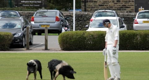 Bollington Cricket Club banner image 2