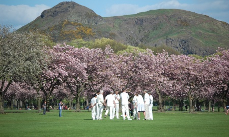Morton Cricket Club banner image 1