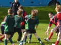 Minis tournament in the sun!! image